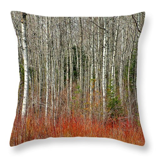 Birch Trees Throw Pillow featuring the photograph Birches In Autumn by Linda McRae