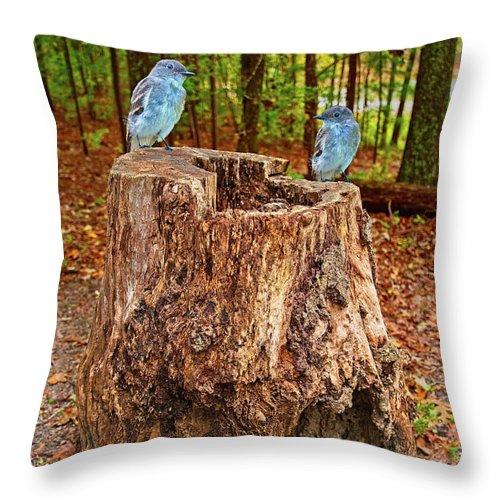 Birds Throw Pillow featuring the photograph Bird Gossip by Sandra Burm