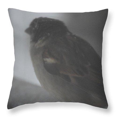 Bird Throw Pillow featuring the photograph Bird In The Snow by Lisa Snarr