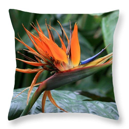 Fower Throw Pillow featuring the photograph Bird Of Paradise 1 by David Dunham