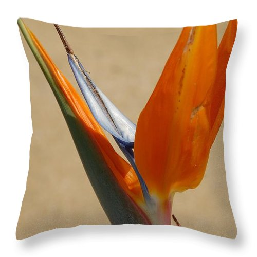 Flower Throw Pillow featuring the photograph Bird Of Paradise II by Jean Booth