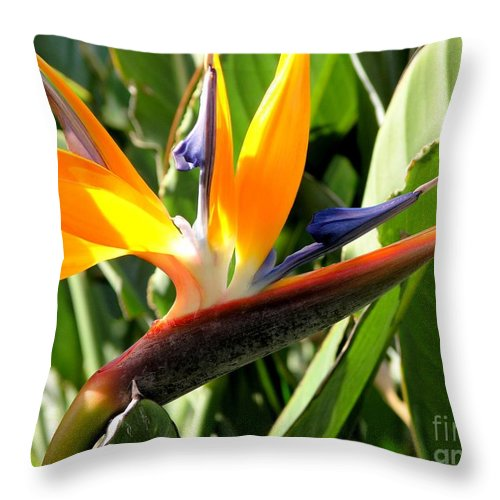 Bird Of Paradise Throw Pillow featuring the photograph Bird Of Paradise by Mary Deal