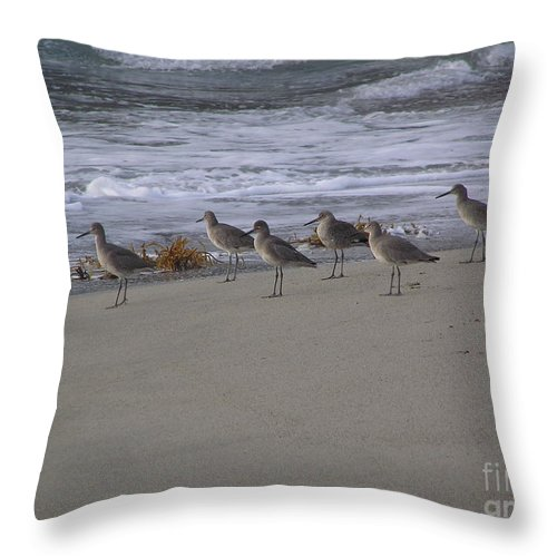 Birds Throw Pillow featuring the photograph Bird Walk by Louise Magno