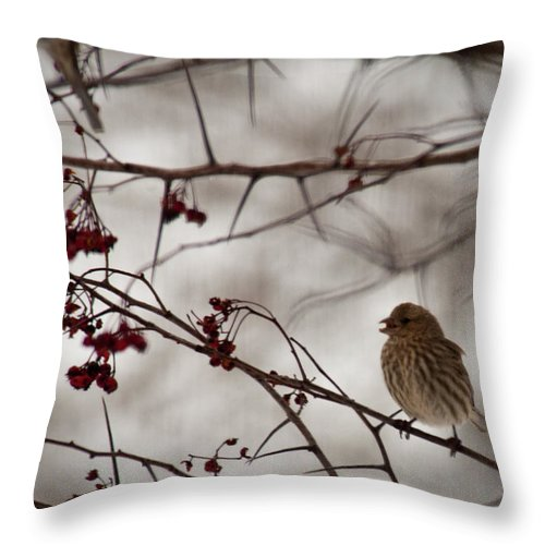 Sparrow Throw Pillow featuring the photograph Bird With Berry by David Arment