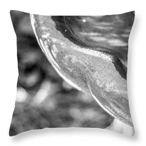 Photograph Throw Pillow featuring the photograph Birdbath by Nicole Parks