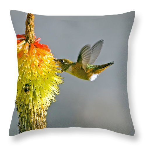 Hummingbird Throw Pillow featuring the photograph Birds And Bees by Mike Dawson