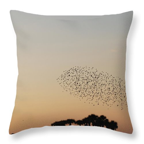 Nature Throw Pillow featuring the photograph Birds In The Sun by Rob Hans