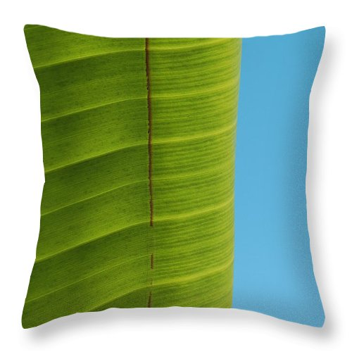 Birds Of Paradise Leaf Throw Pillow featuring the photograph Birds Leaf by Kelly Wade