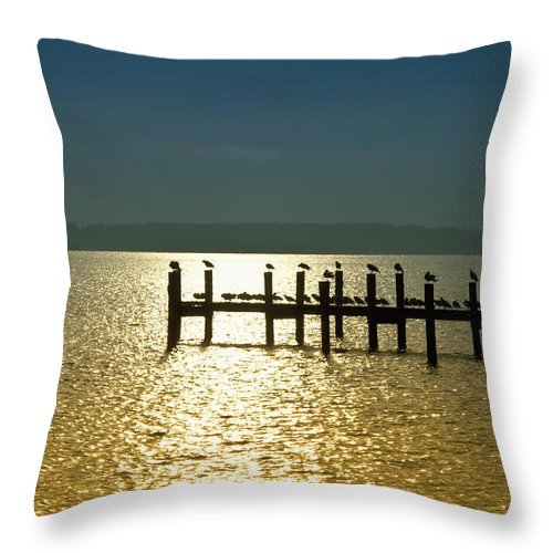Birds Throw Pillow featuring the photograph Birds Of A Feather Flock Together by Bill Cannon