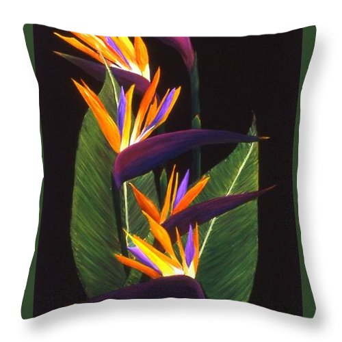 Floral Throw Pillow featuring the painting Birds of Paradise by Mary Erbert