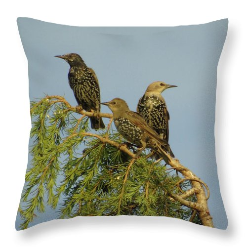Three Throw Pillow featuring the photograph Birds-on-watch by Gordon Auld