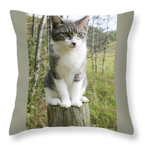 Birdwatcher Throw Pillow featuring the photograph Birdwatcher by Bjorn Sjogren