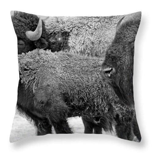 Buffalo Throw Pillow featuring the photograph Bison - Way Out West by Melany Sarafis