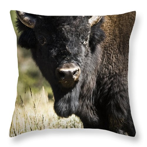 Bison Throw Pillow featuring the photograph Bison Bull by Chad Davis