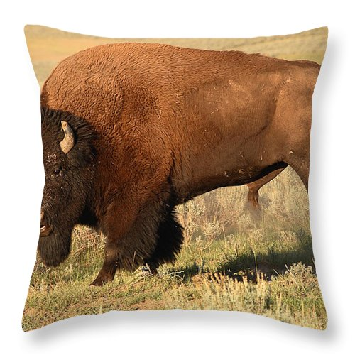 Bison Throw Pillow featuring the photograph Bison Huffing And Puffing For Herd by Max Allen