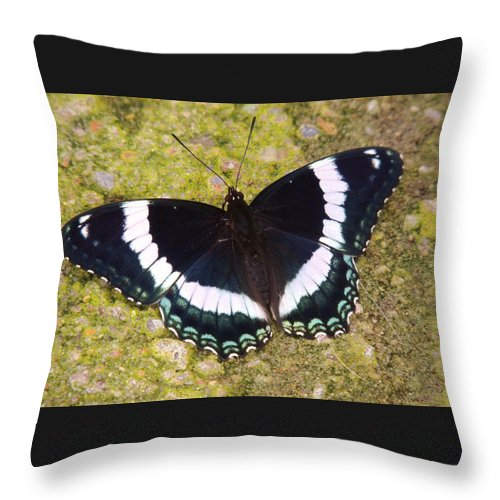 Butterfly Throw Pillow featuring the photograph Black And White Butterfly by Lisa Gilliam