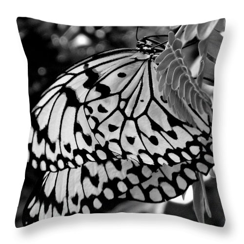Photograph Throw Pillow featuring the photograph Black And White Butterfly by Shelley Jones