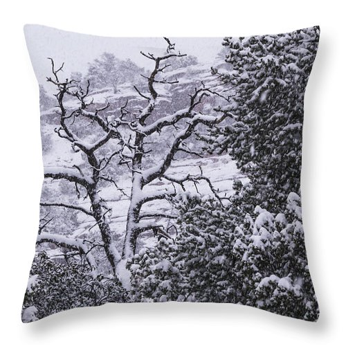 Snow Throw Pillow featuring the photograph Black And White Day by Laura Pratt