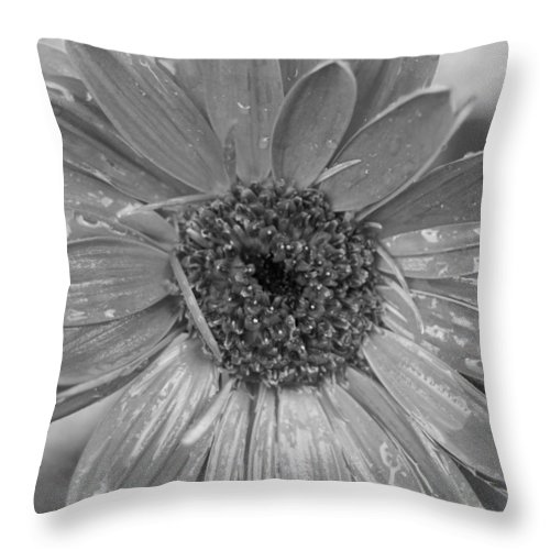 Gerber Daisy Throw Pillow featuring the photograph Black And White Gerbera Daisy by Amy Fose