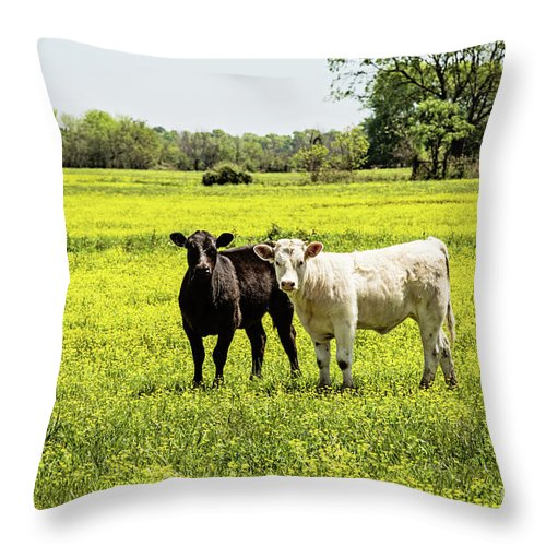 Cattle Throw Pillow featuring the photograph Black And White On Yellow by Scott Pellegrin