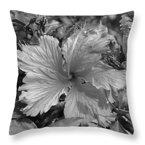 Black And White Throw Pillow featuring the photograph Black And White by Rob Hans