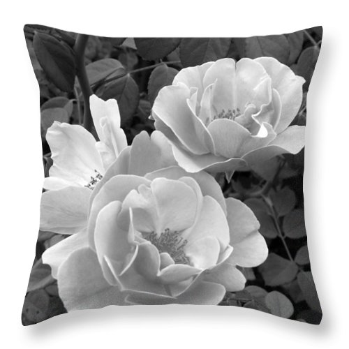 Rose Throw Pillow featuring the photograph Black And White Roses 1 by Amy Fose