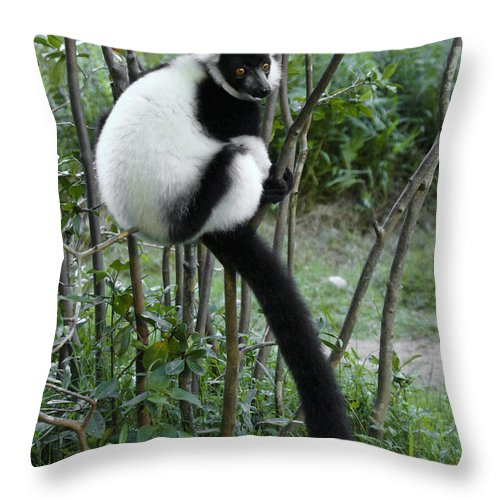 Madagascar Throw Pillow featuring the photograph Black And White Ruffed Lemur by Michele Burgess