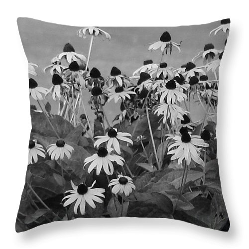Throw Pillow featuring the photograph Black And White Susans by Luciana Seymour