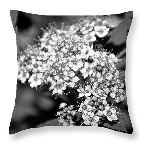 Flower Throw Pillow featuring the photograph Black And White Twinkle by Aimee L Maher ALM GALLERY