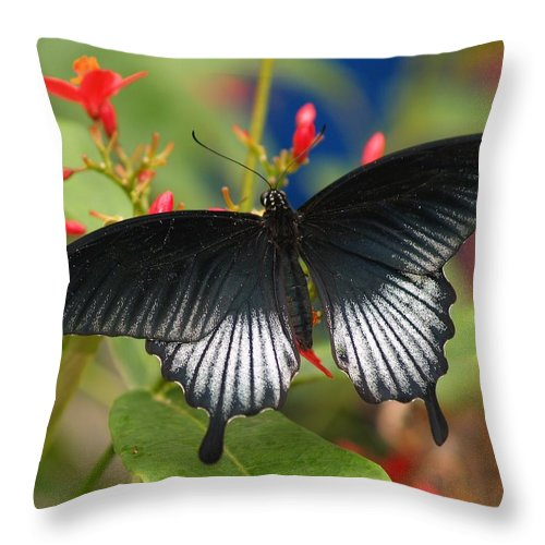 Butterfly Throw Pillow featuring the photograph Black Beauty by Gaby Swanson