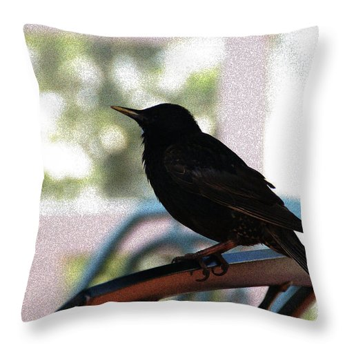 Black Bird Throw Pillow featuring the photograph Black Bird by Linda Shafer