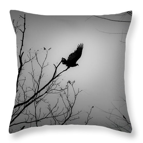 Black Throw Pillow featuring the photograph Black Buzzard 1 by Teresa Mucha