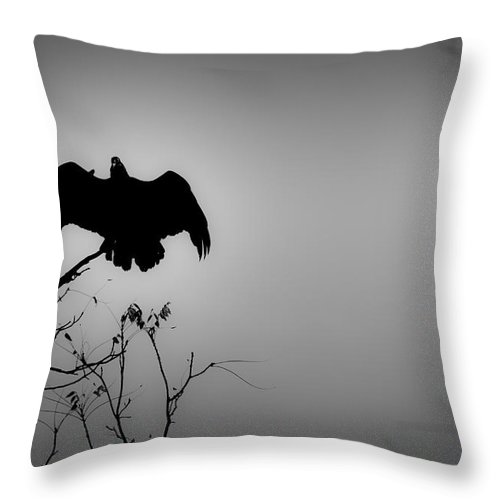 Black Throw Pillow featuring the photograph Black Buzzard 2 by Teresa Mucha