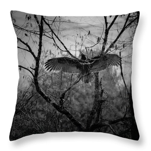 Black Throw Pillow featuring the photograph Black Buzzard 3 by Teresa Mucha