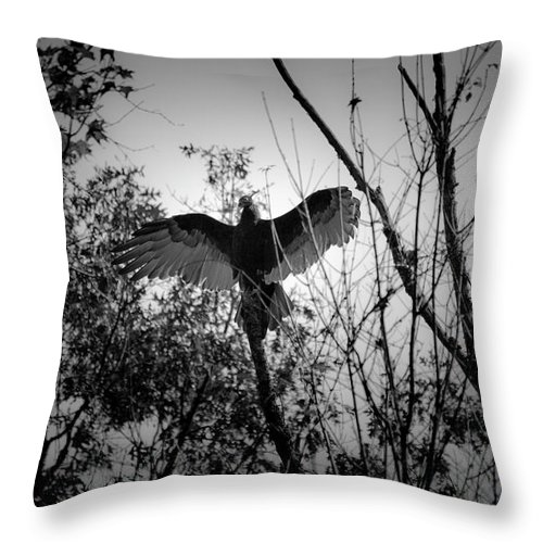 Black Throw Pillow featuring the photograph Black Buzzard 4 by Teresa Mucha