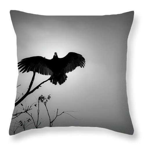 Black Throw Pillow featuring the photograph Black Buzzard 5 by Teresa Mucha