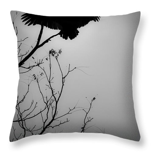 Black Throw Pillow featuring the photograph Black Buzzard 6 by Teresa Mucha