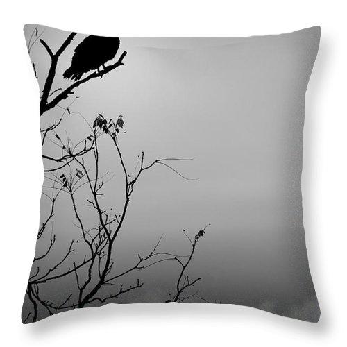 Black Throw Pillow featuring the photograph Black Buzzard 7 by Teresa Mucha
