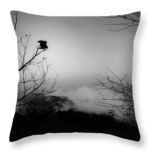Black Throw Pillow featuring the photograph Black Buzzard 8 by Teresa Mucha