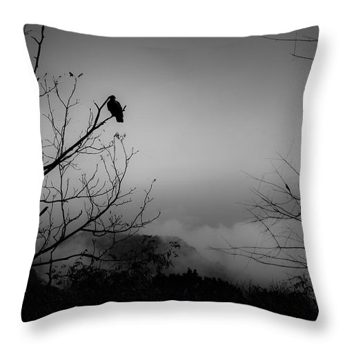 Black Throw Pillow featuring the photograph Black Buzzard 9 by Teresa Mucha