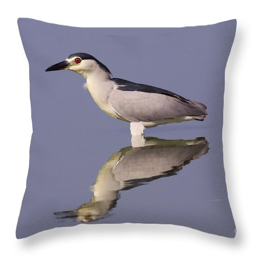 Animal Throw Pillow featuring the photograph Black-crowned Night Heron by Alon Meir