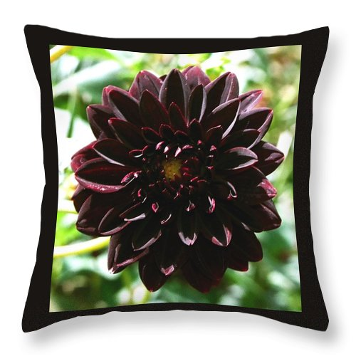 Flower Throw Pillow featuring the photograph Black Dalia by Dean Triolo