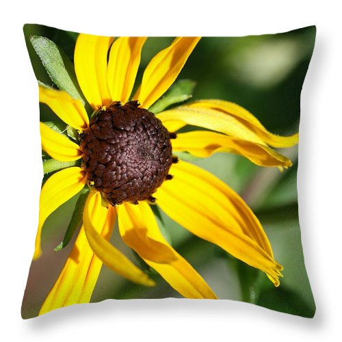 Flower Throw Pillow featuring the photograph Black Eyed Susan by Christiane Schulze Art And Photography