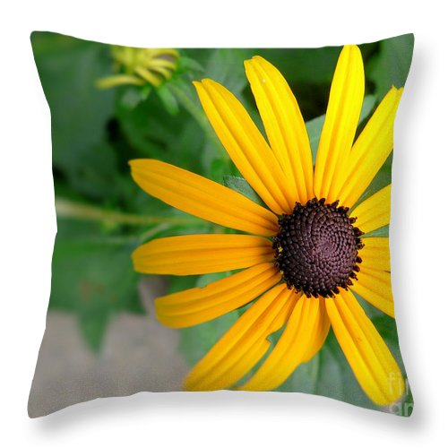 Black Eyed Susan Throw Pillow featuring the photograph Black Eyed Susan by Denise Jenks