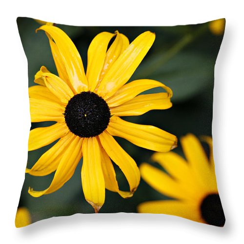 Black Eyed Susan Throw Pillow featuring the photograph Black Eyed Susan by Marilyn Hunt
