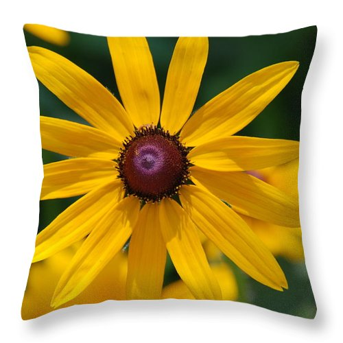 Flowers Throw Pillow featuring the photograph Black Eyed Susan by Susanne Van Hulst