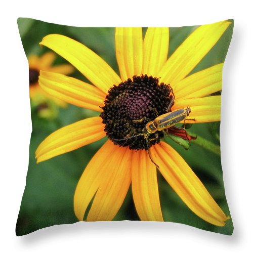 Flower Throw Pillow featuring the photograph Black-eyed Susan With Soldier Beetle by Robert Anastasi