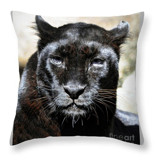 Black Throw Pillow featuring the photograph Black Leopard by Savannah Gibbs