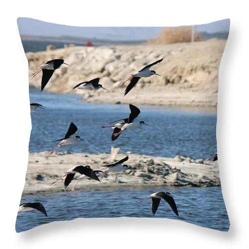 Black Throw Pillow featuring the photograph Black-necked Stilts In Flight by Christy Pooschke