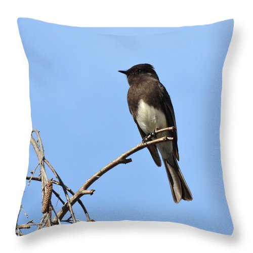 Phoebe Throw Pillow featuring the photograph Black Phoebe 2 by David Hohmann
